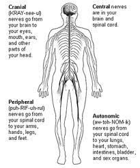 causes for peripheral neuropathy